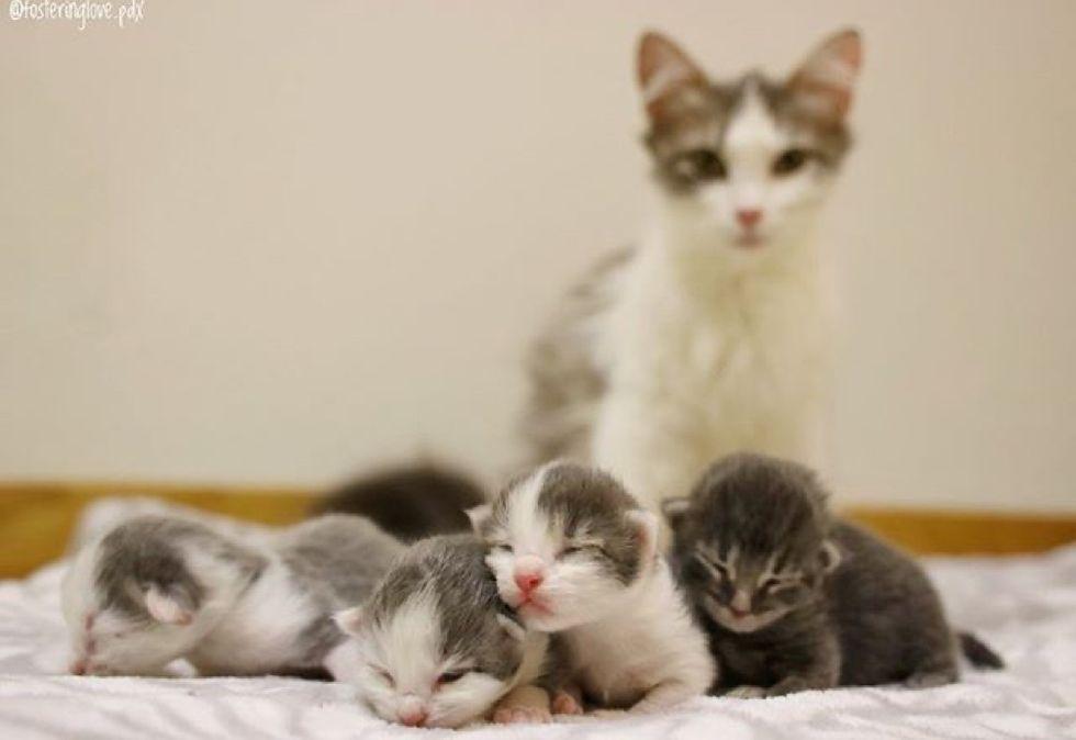 newborn kittens, cute, cat