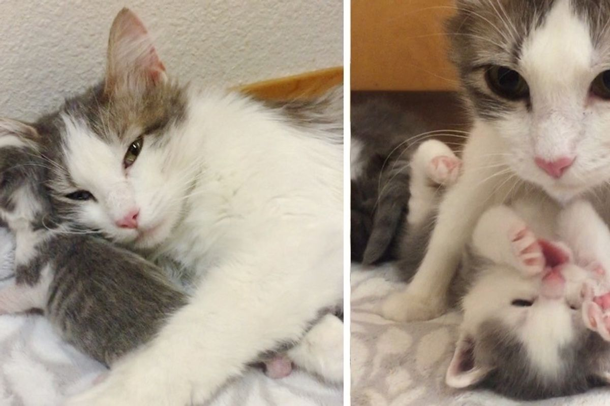 Stray Cat Comes to Family Just in Time so Her Kittens Can Live Best Life