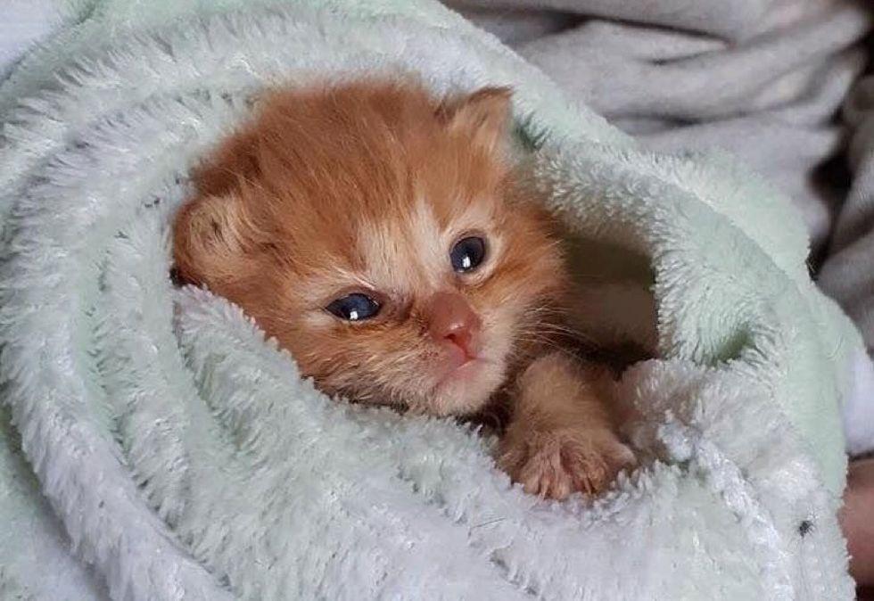 purrito kitten, cute