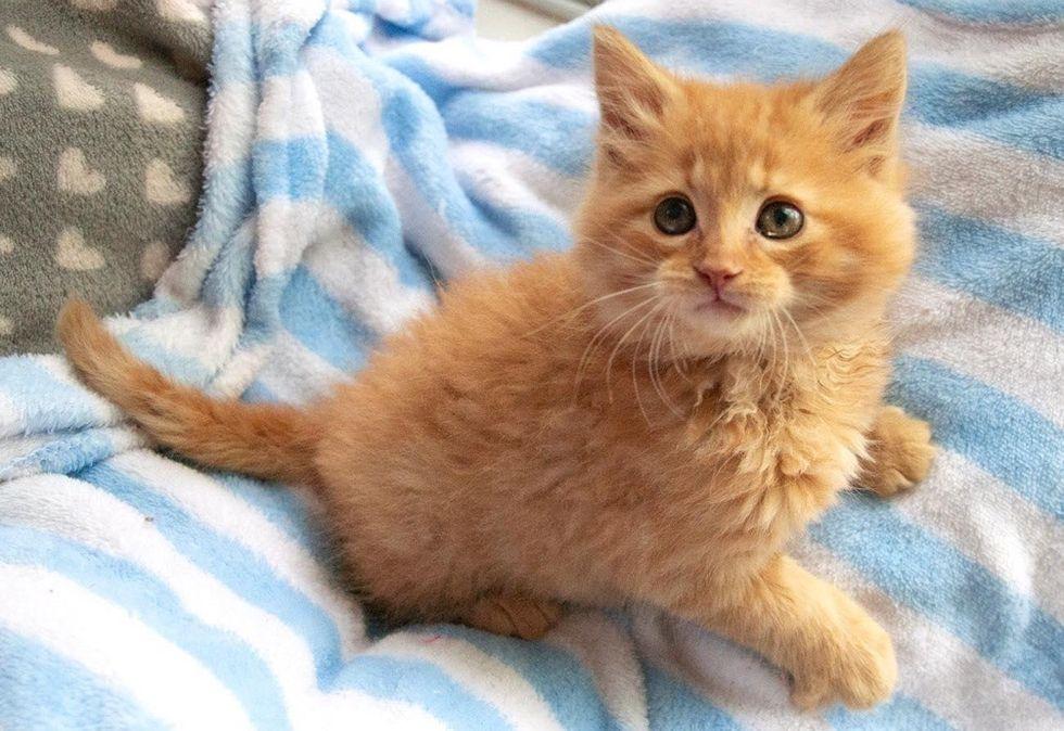 cute, kitten, ginger kitty