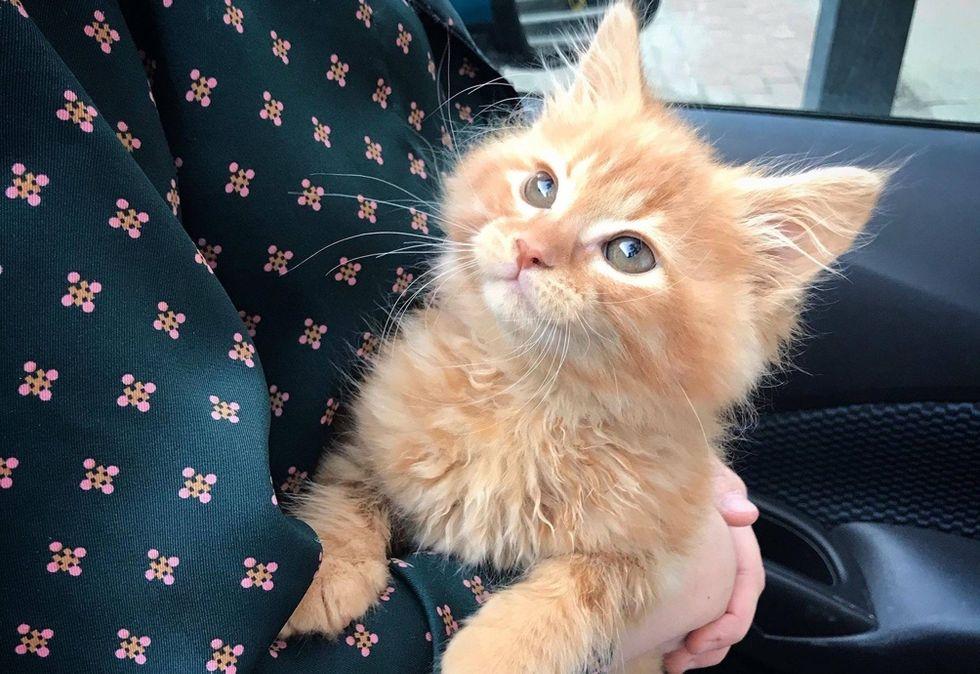 cute kitten, ginger, cuddles