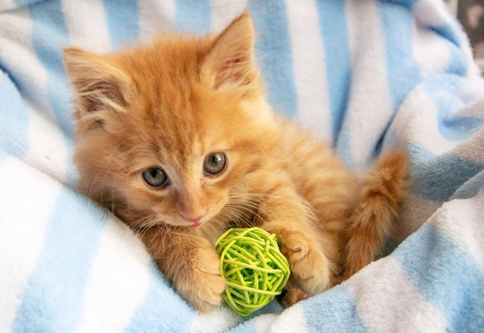 ginger kitten, cute cat