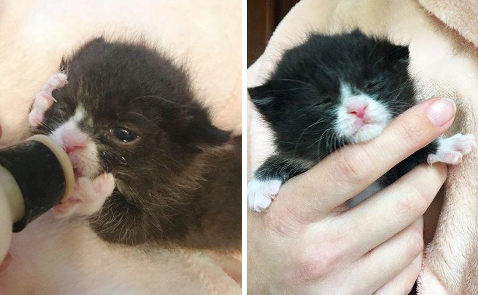 tuxedo kitten, bottle kitten, sleepy kitten