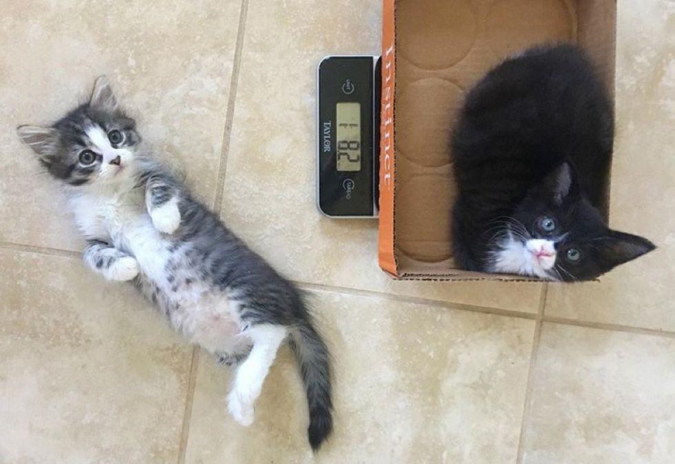 kittens, cute, best friends