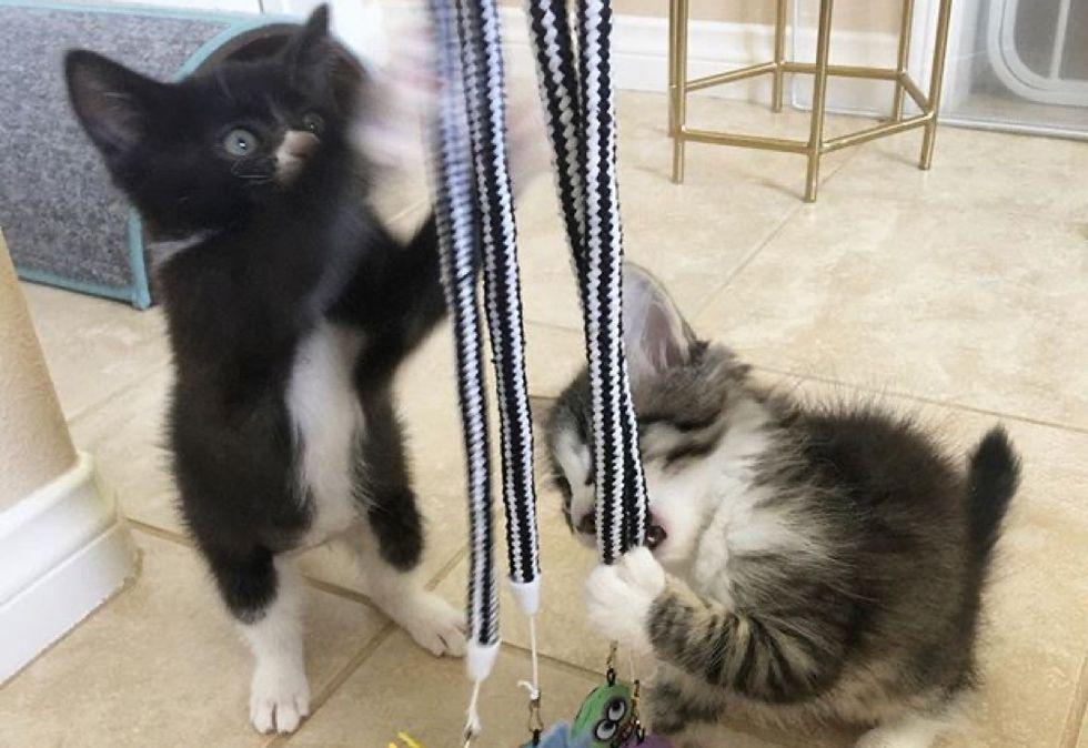 friends, playing, cute kittens