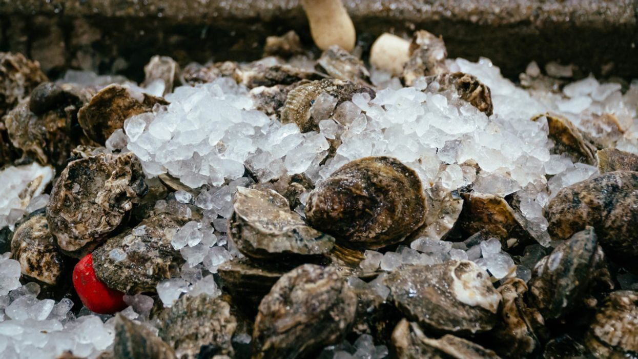 Extreme Weather Threatens Wild Gulf Coast Oysters