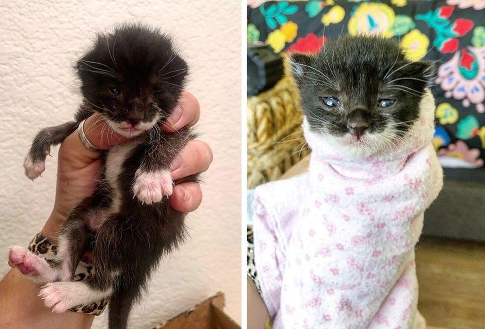 stray kitten, barn kitten, purrito