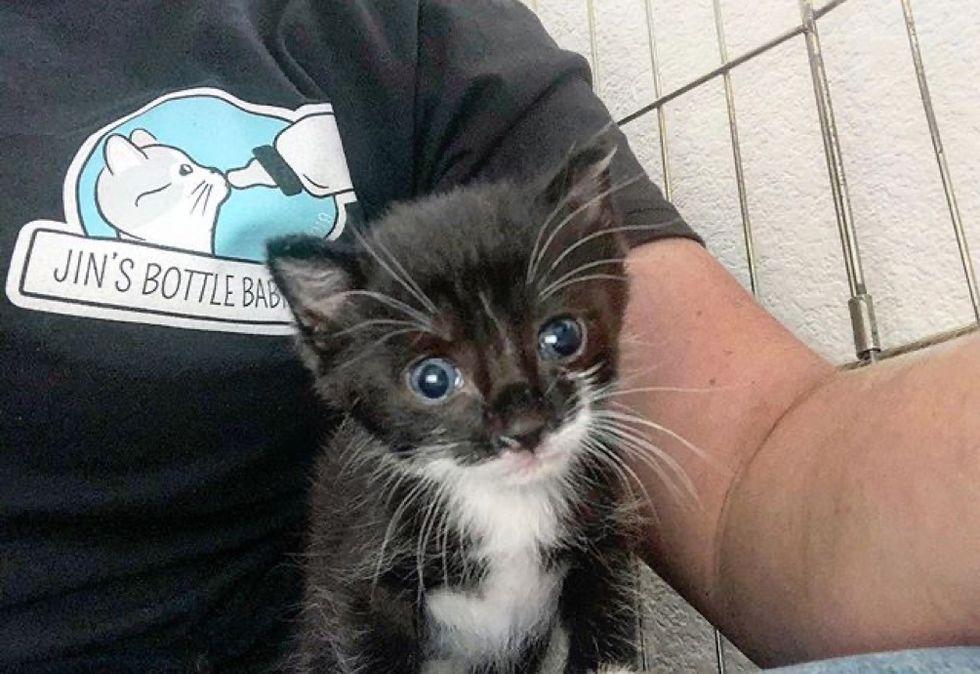 lap cat, cute kitten