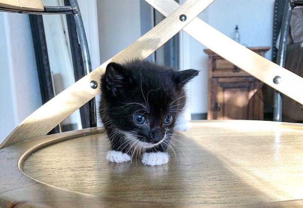 tiny kitten, mittens