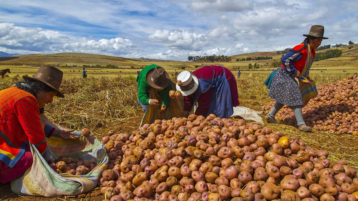 Indigenous Peoples Hold the Past and Future of Food in Their Hands