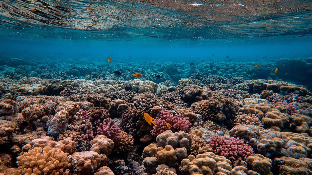 Ocean Warming Threatens Coral Reefs and Soon Could Make It Harder to Restore Them