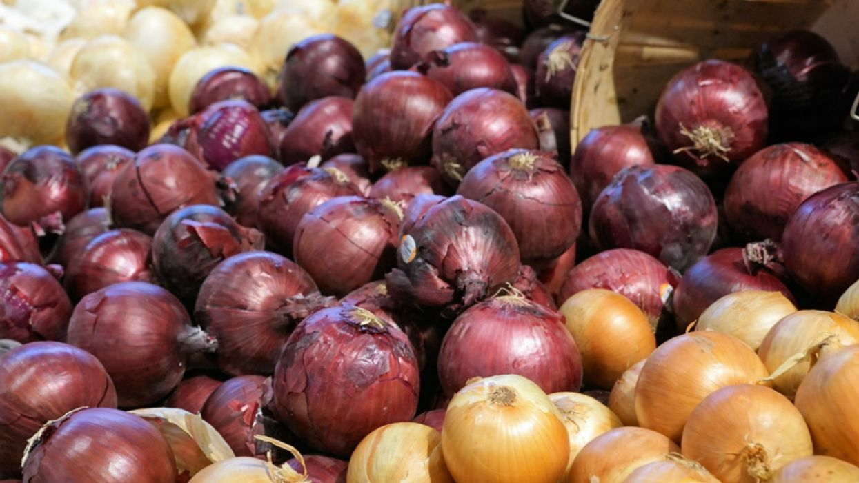 Salmonella Outbreak Linked to Onions Spreads to 43 States and Canada