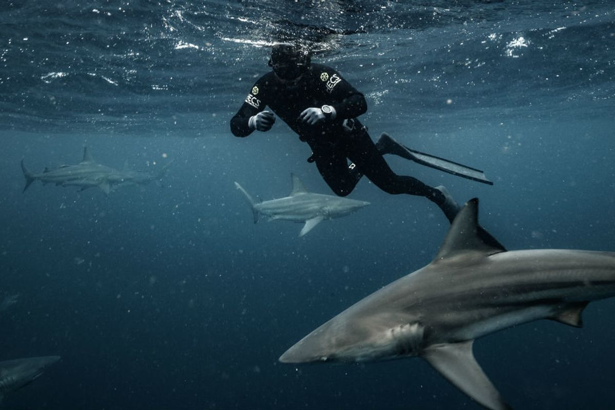 Shark Week host Forrest Galante is helping change hearts and minds about nature's most feared predator