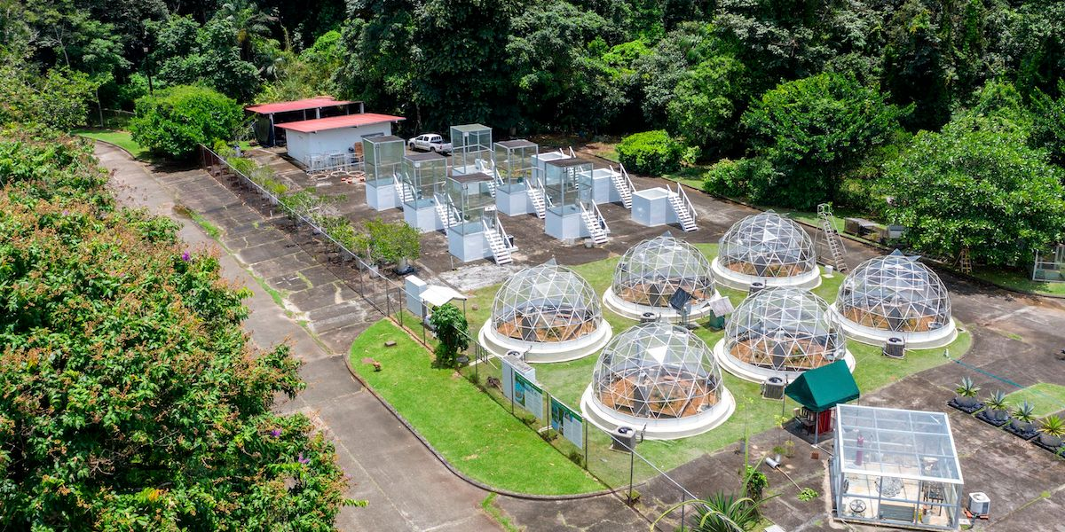 Warming Tropical Soil Emits Unexpectedly Large Amounts of CO2, New Study Finds