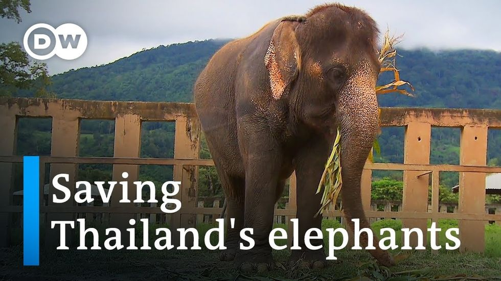 Life After the Tourist Trade for Thailand's Elephants