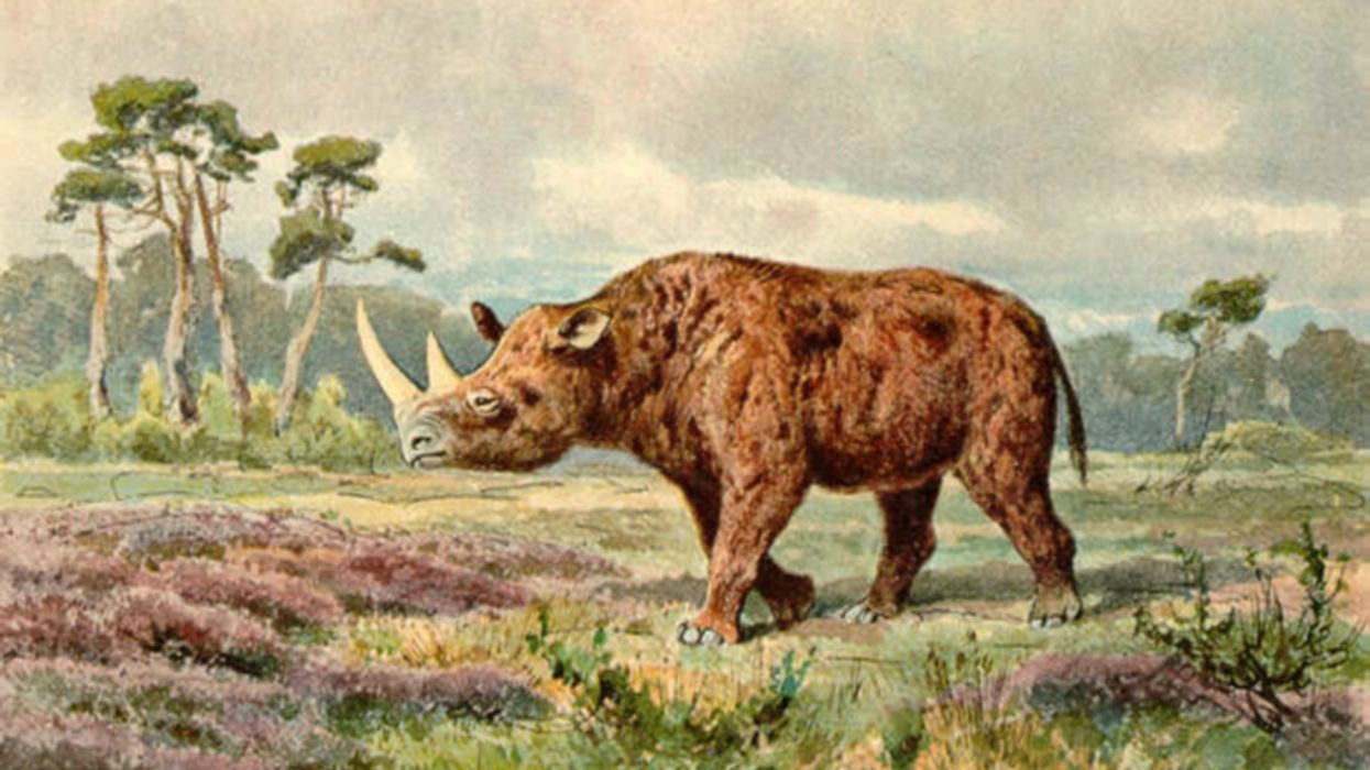 Climate Change, Not Humans, Likely Eliminated Woolly Rhinos, New Study Shows