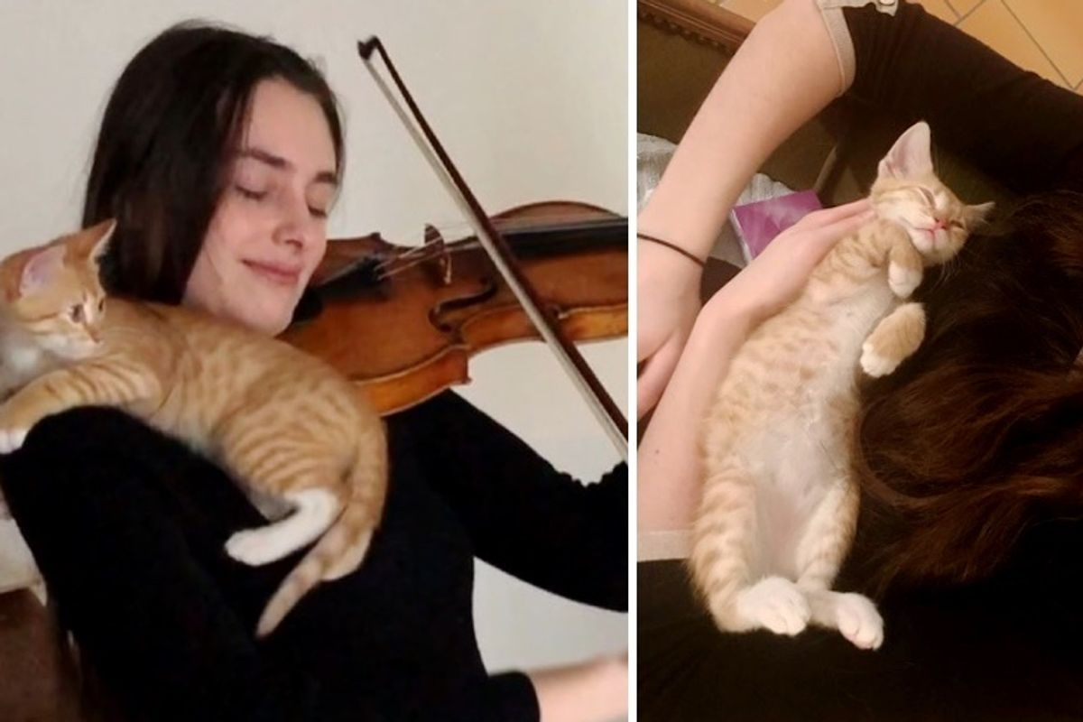 Kitten Found His Way to Violinist and Became Her Sweetest Audience