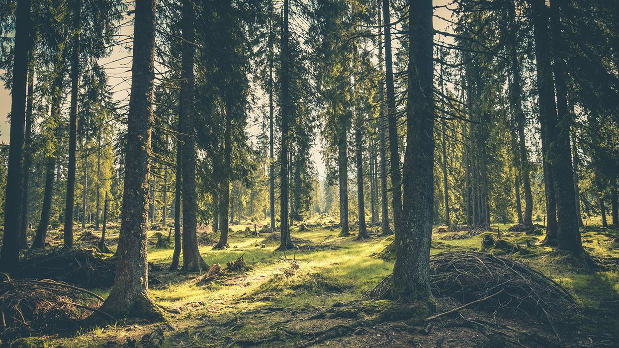 5 Things You Might Not Know About Forests – But Should