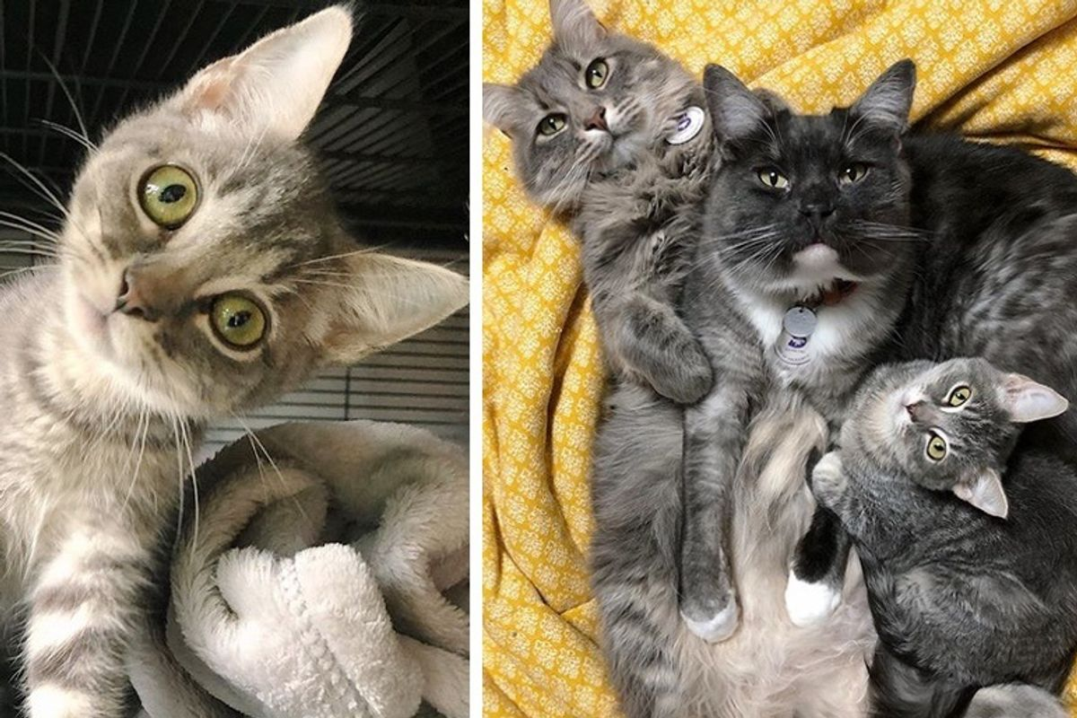 Family Cats Take to Kitten with Head Tilt and Insist on Keeping Her