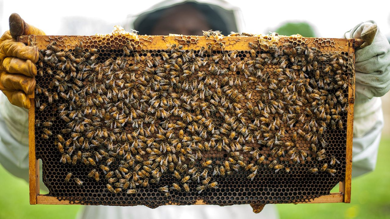 Honey Bees Can T Practice Social Distancing So They Stay Healthy In Close Quarters By Working Together Ecowatch
