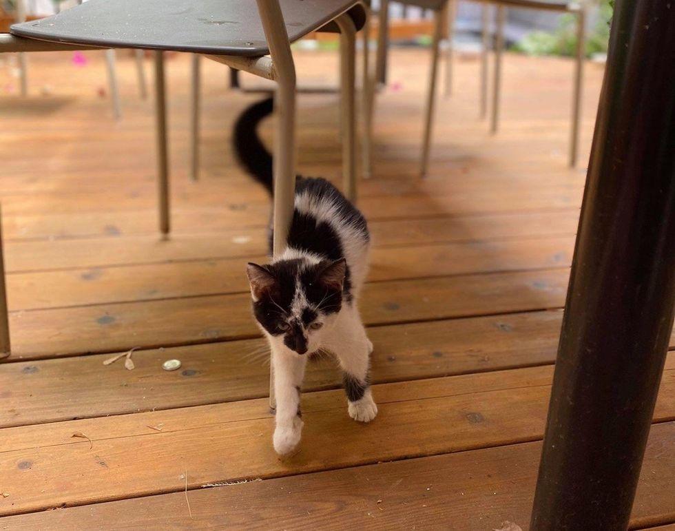 street, kitten, cow cat