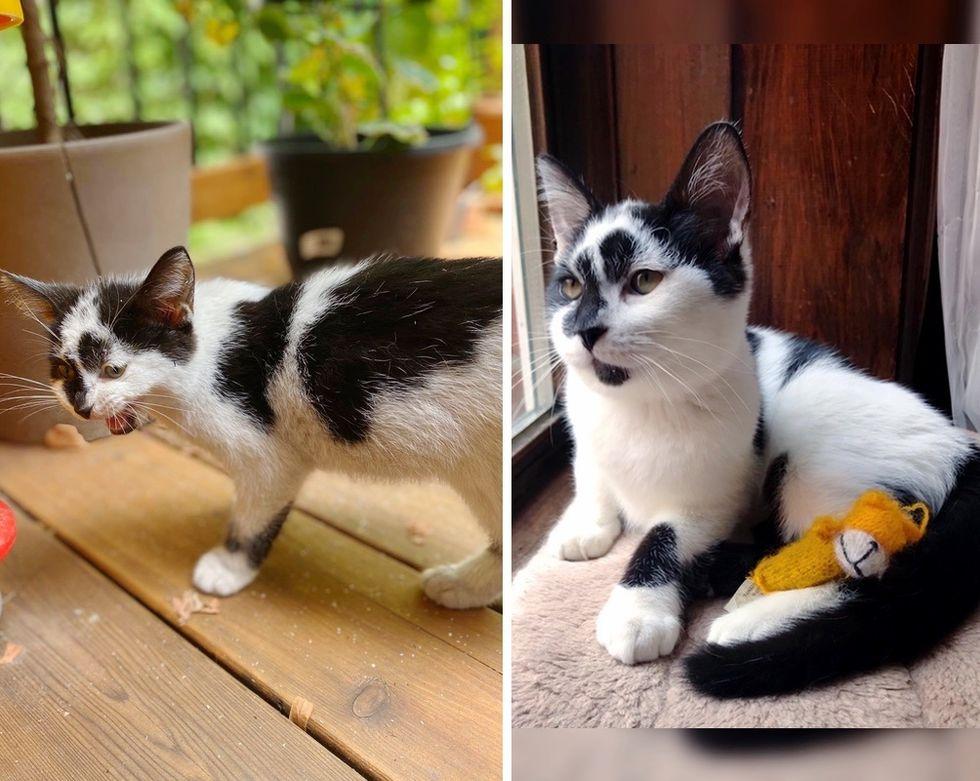 stray kitten, cute kitten