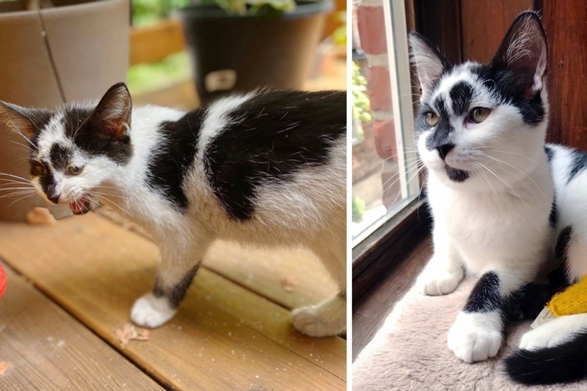 Stray Kitten Walks onto Family's Porch for Food and Has Her Life Turned Around