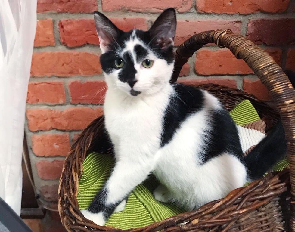 kitten, cute, basket