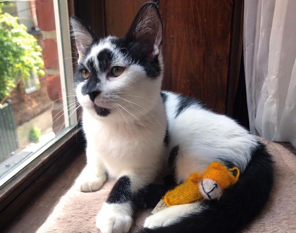 cat tv, cute kitten