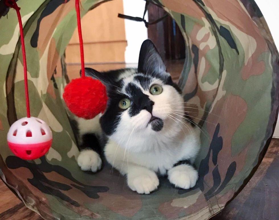 cat toys, kitten, cute
