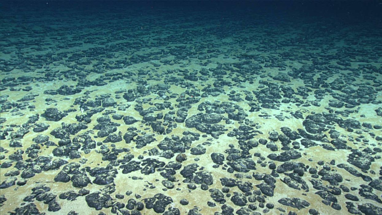 There's a Rush to Mine Deep Seabeds, With Unknown Ecological Impacts