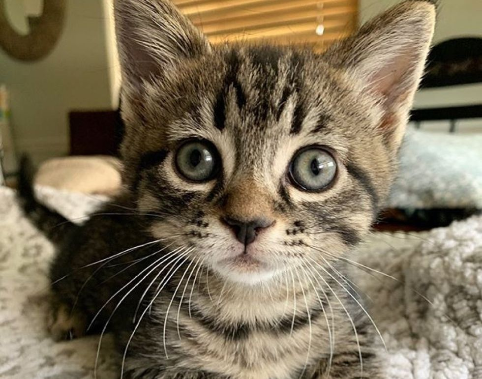 cute cat, tabby kitten