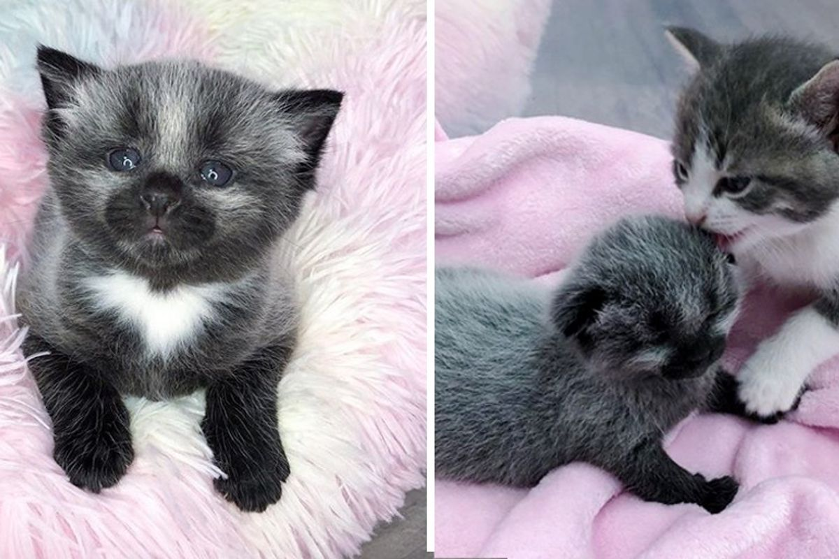 Kitten with Unusual Coat is Taken in By Cat Family After Being Found on Sidewalk