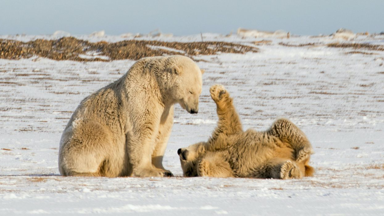 Trump Greenlights Drilling in the Arctic National Wildlife Refuge, but Will Oil Companies Show Up?