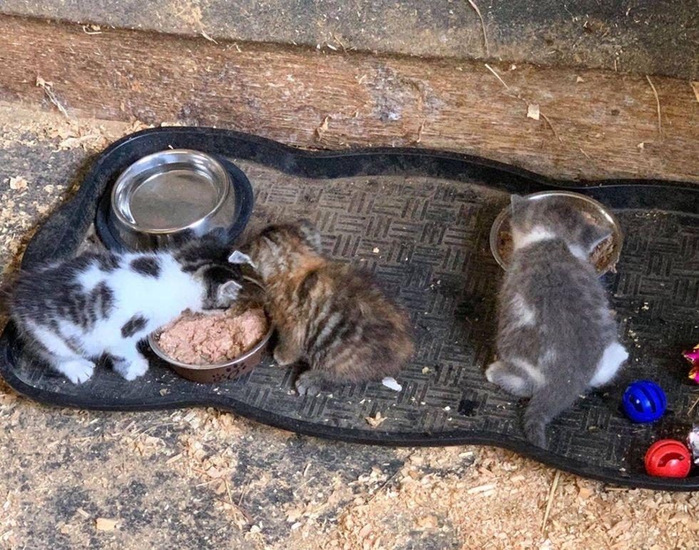 kittens, cat food, farm