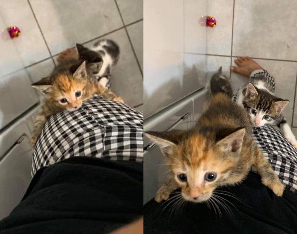 kittens, climbing, legs