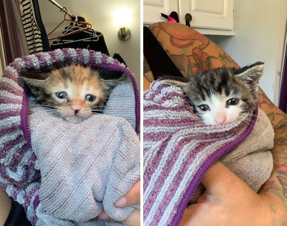 kittens, purrito, bath