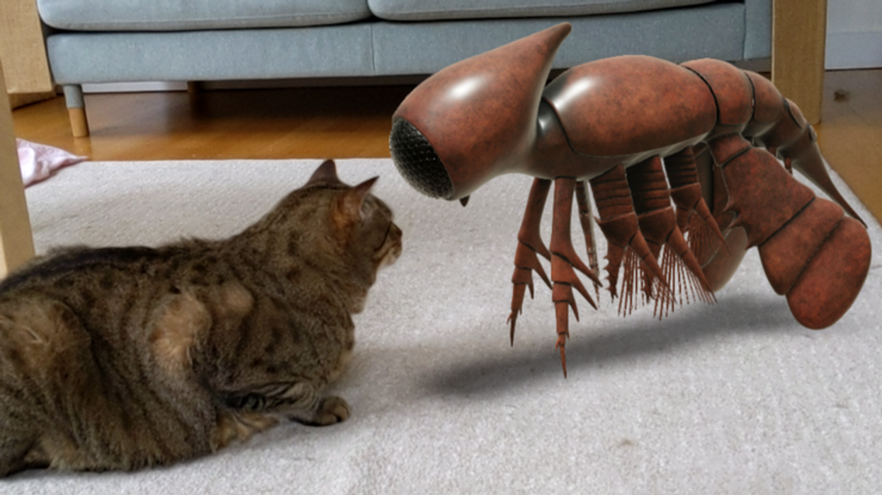 cat face to face with AR creature