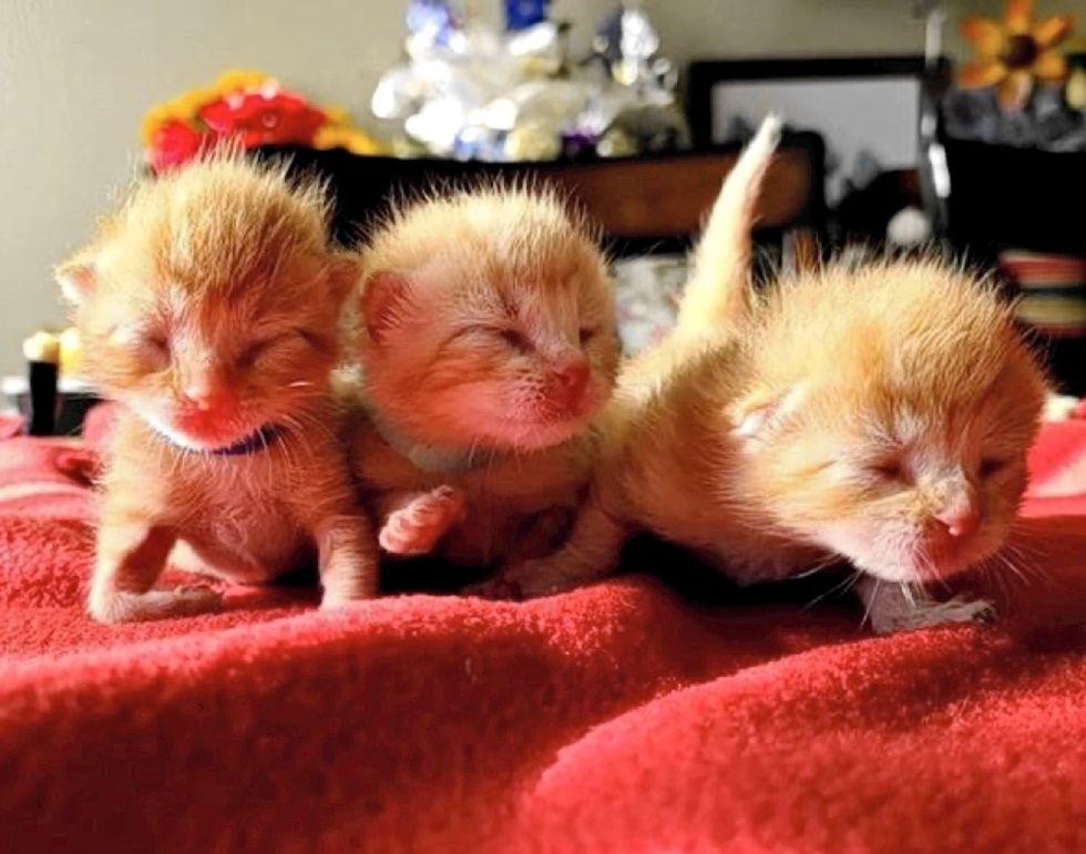 newborn kittens, ginger cats, sisters