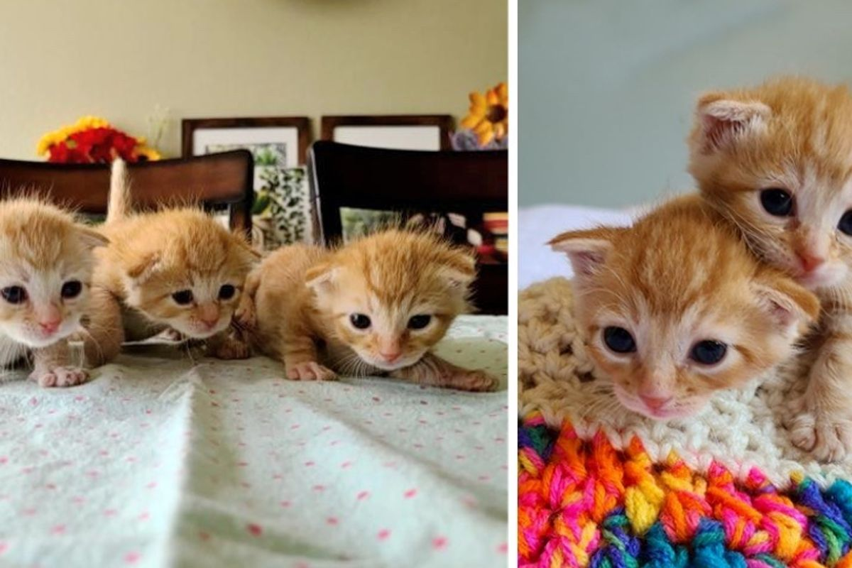 Kitten Triplets Found in Apartment Complex Stick Together to Help Each Other Thrive