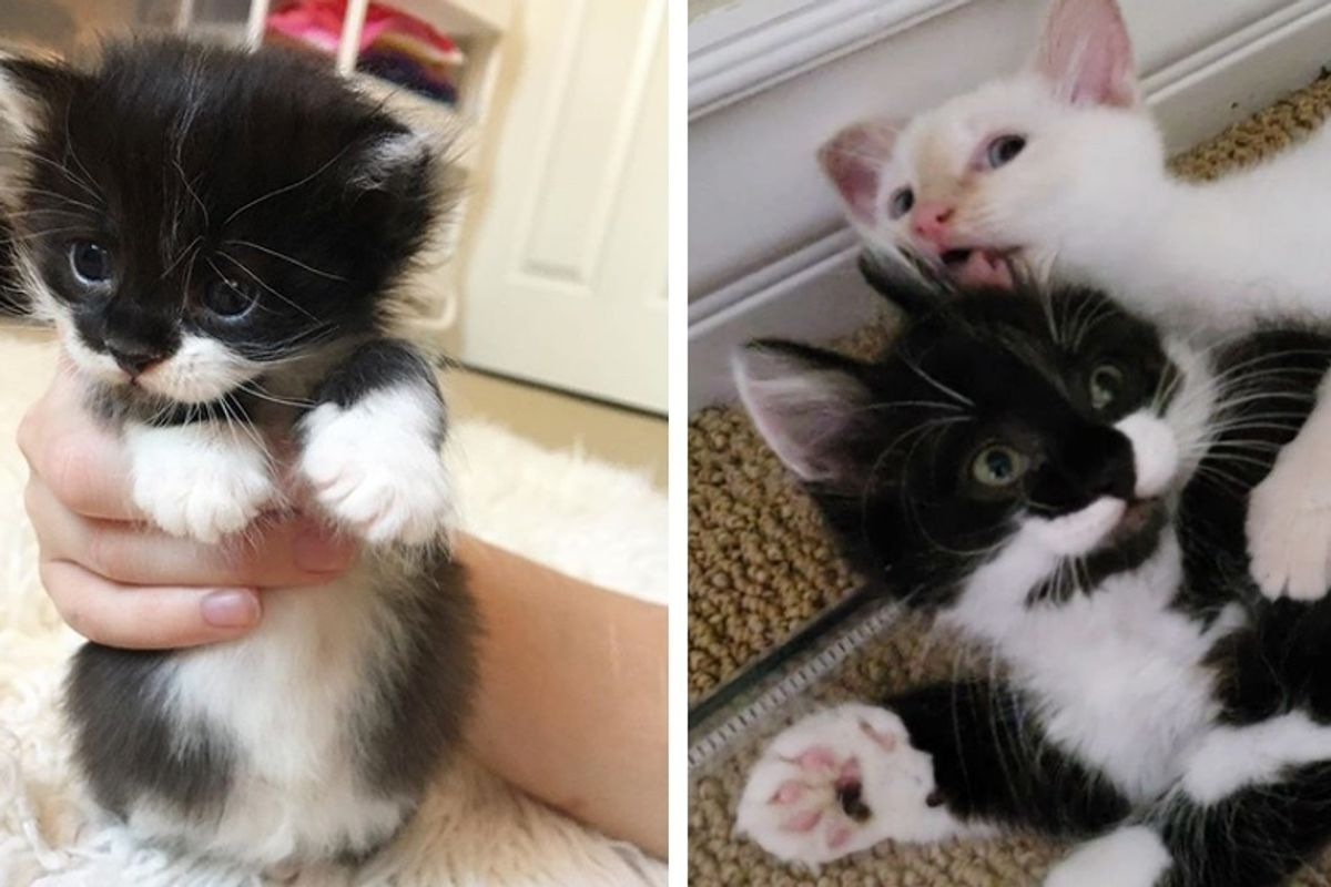 Kitten Rescued from a Yard, Finds the Perfect Friend He Always Wanted