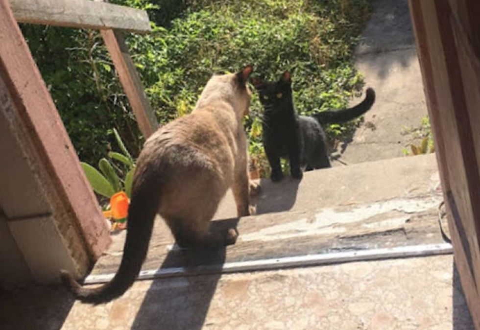 stray cat, friends