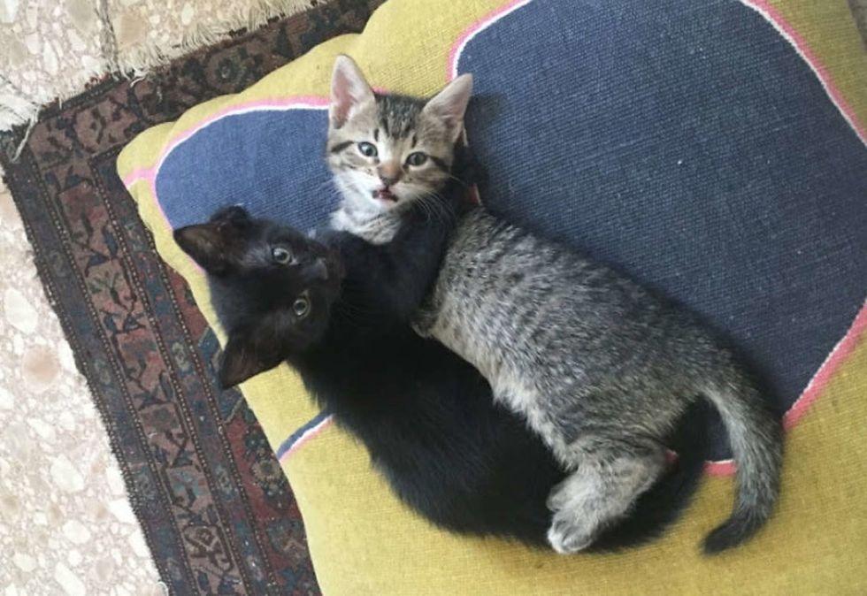 cuddle, hug, kittens, cute