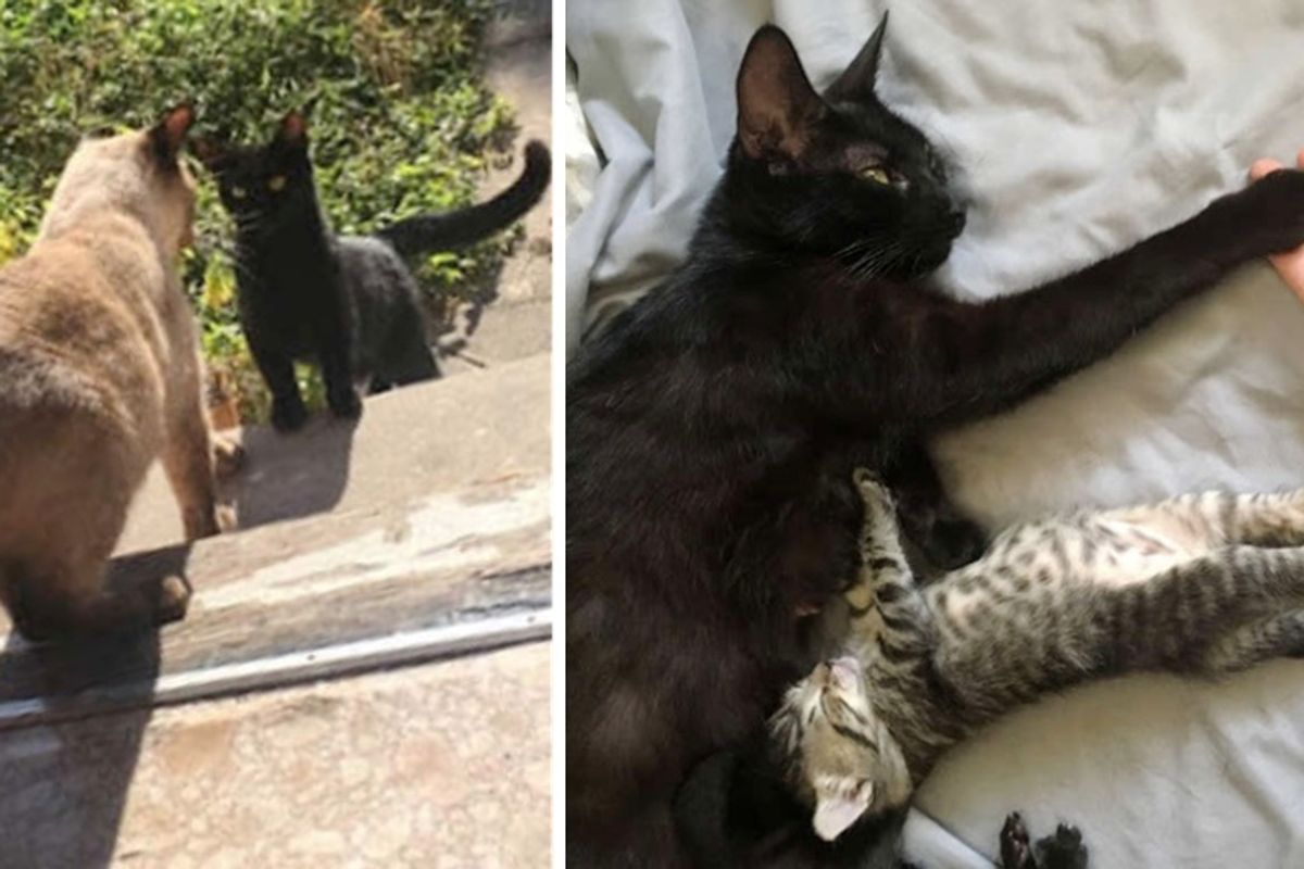 Stray Cat Comes Back to the Family She Befriended So She Can Have Kittens