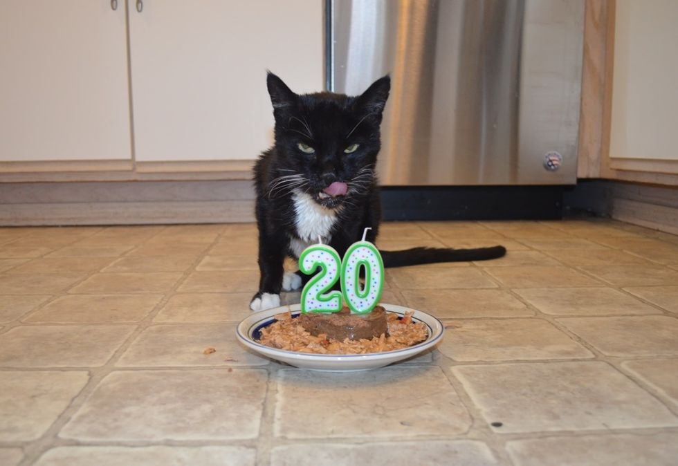 birthday cat, 20 years old, tuxedo cat, older cat
