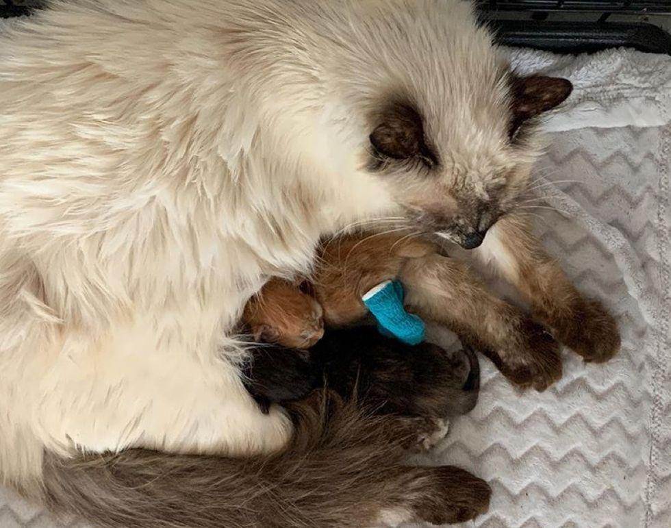 cat mom, kittens, sleeping