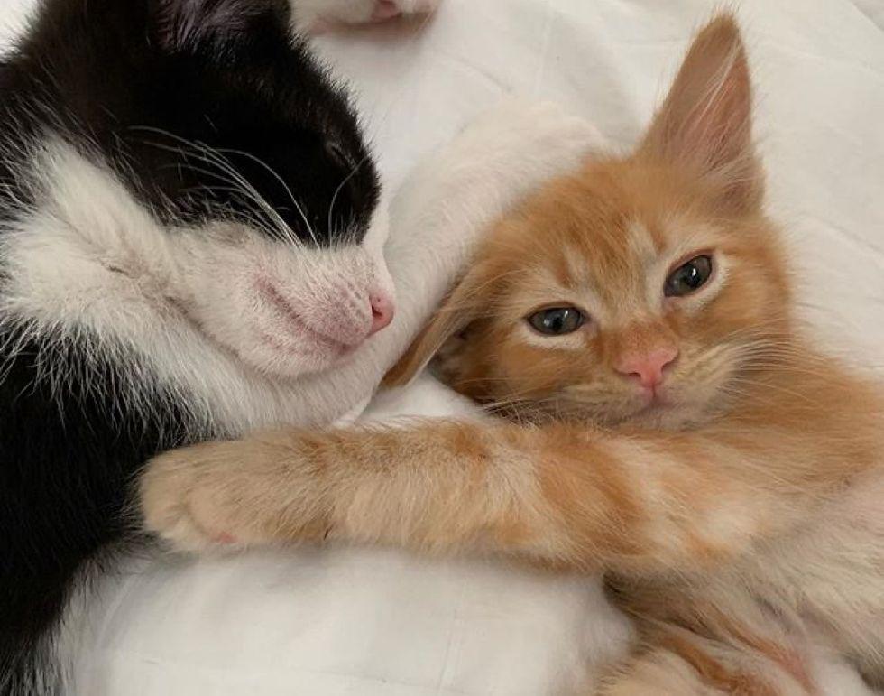 kittens, friends, cute