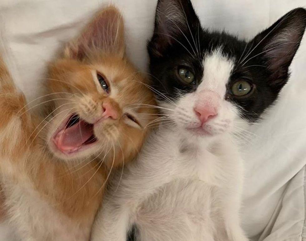 cute kittens, friends