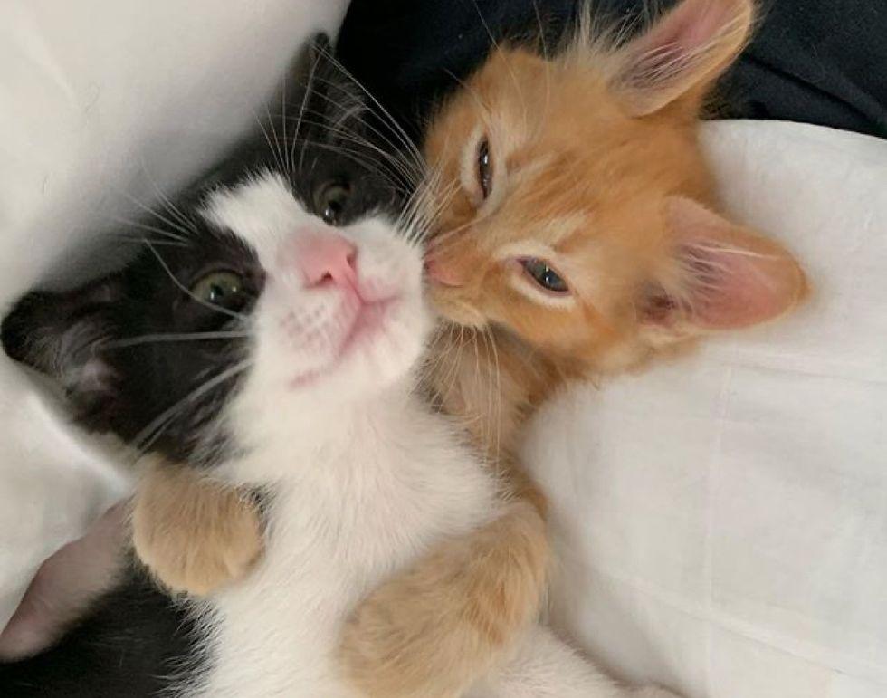 kittens, cuddles, buddies