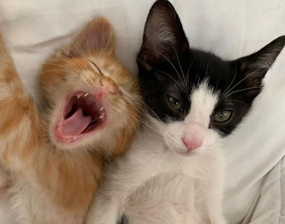 kittens, cute cats, yawn